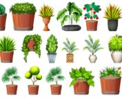 Plant Collecting